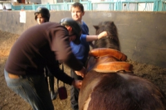 equitation_368